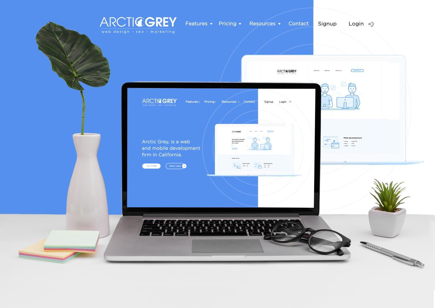 arctic greyy
